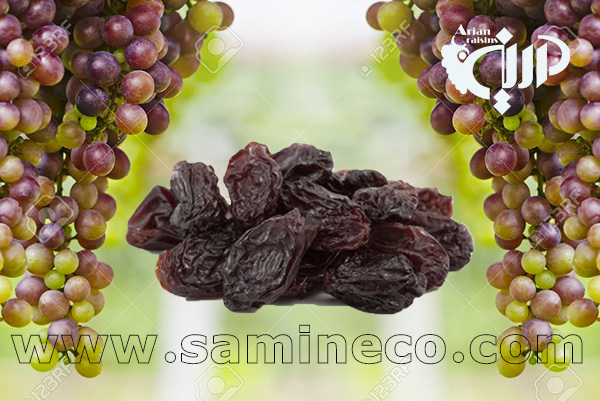 raisin price