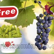 Buy raisins online from producers website