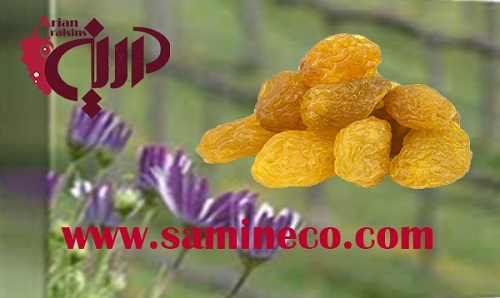 golden raisin iran