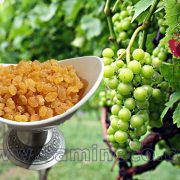 Golden arian raisins wholesale price in india