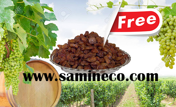 iran raisin production