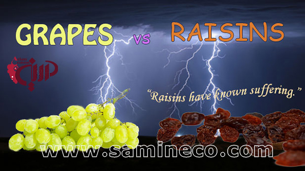 raisins sale uk